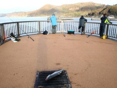 豊浦フィッシャリーナでアキアジ釣り(鮭釣り)釣果あり!